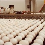 Yearly egg donations from Gemperle farms